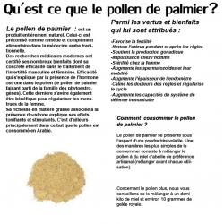 Pollen de palmier